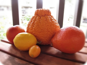 Citrus Bunch